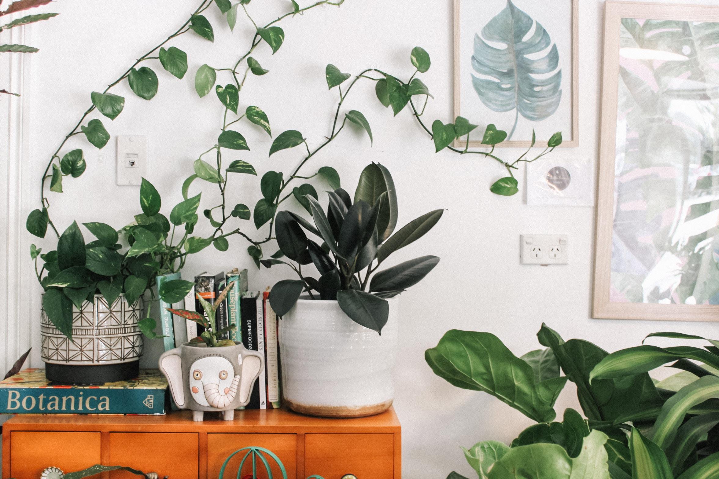 軟裝佈置 綠色植物